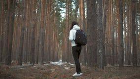 Κορίτσι οδοιπόρων με το σακίδιο πλάτης που περπατά σε ένα πεύκο δασικό απόθεμα βίντεο