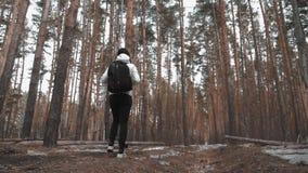 Κορίτσι οδοιπόρων με το σακίδιο πλάτης που περπατά σε ένα πεύκο δασικό, οπισθοσκόπος Ενεργοί τρόπος ζωής και περιπέτεια στη φύση  απόθεμα βίντεο