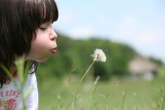 κορίτσι πικραλίδων λίγα Στοκ Φωτογραφία