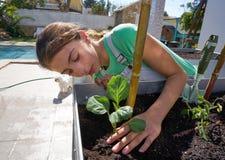 Κορίτσι που εργάζεται αυξημένο στον οπωρώνας κήπο κρεβατιών στοκ εικόνες με δικαίωμα ελεύθερης χρήσης