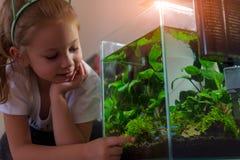 Κορίτσι που θαυμάζει το νανο ενυδρείο στο σπίτι του τη νύχτα στοκ εικόνες