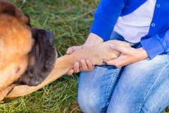Κορίτσι που κρατά ένα πόδι σκυλιών Στοκ Εικόνες