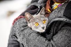 Κορίτσι που κρατά μια γκρίζα διάσωση πυρκαγιάς γατών Στοκ εικόνα με δικαίωμα ελεύθερης χρήσης