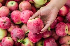 Κορίτσι που κρατά τη Apple διαθέσιμη ενάντια στα φρούτα Στοκ φωτογραφία με δικαίωμα ελεύθερης χρήσης
