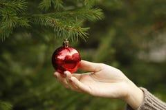 Κορίτσι που κρεμά τη διακοσμητική σφαίρα παιχνιδιών στον κλάδο χριστουγεννιάτικων δέντρων Στοκ εικόνες με δικαίωμα ελεύθερης χρήσης