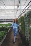 Κορίτσι που περπατά στο θερμοκήπιο πορτοκαλιών Στοκ Εικόνες