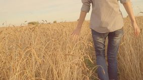 Κορίτσι που περπατά στο χρυσό τομέα, σχετικά με τα αυτιά του σίτου Farmer, συγκομιδή Slomo απόθεμα βίντεο