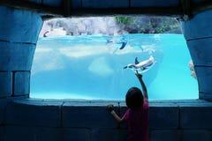Κορίτσι που προσέχει penguin σε ένα ενυδρείο Στοκ Φωτογραφία