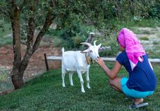 Κορίτσι που ταΐζει την άσπρη αίγα 3 στοκ εικόνες