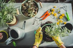 Κορίτσι που φυτεύει μια εγκατάσταση-ανώτατη άποψη στοκ εικόνες