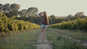 Κορίτσι στα σορτς και πουκάμισο που περπατά στους αμπελώνες απόθεμα βίντεο