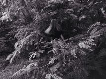 Κορίτσι στις άγρια περιοχές Στοκ Φωτογραφία