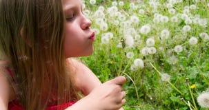 Κορίτσι στο λιβάδι των πικραλίδων απόθεμα βίντεο