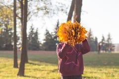 Κορίτσι στο πάρκο φθινοπώρου που κρατά μια ανθοδέσμη των φύλλων που καλύπτουν το πρόσωπό της στοκ φωτογραφία
