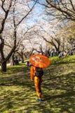 Κορίτσι στο παραδοσιακό φόρεμα κιμονό με την ομπρέλα και με το sakura Στοκ Φωτογραφίες