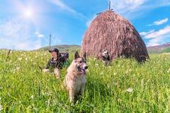Κορίτσι τουριστών και δύο σκυλιά Στοκ Φωτογραφίες