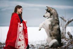 Κορίτσι το από την Αλάσκα σκυλί malamute που τυλίγεται με στο σκυλί καλυμμάτων και τραίνων Στοκ Φωτογραφία