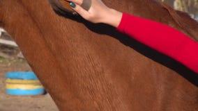 Κορίτσι χεριών που κτενίζει τη χτένα αλόγων κίνηση αργή κλείστε επάνω απόθεμα βίντεο
