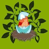 Κορίτσι eggshell στη φωλιά Στοκ Φωτογραφίες
