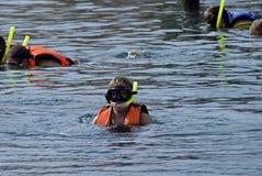 κορίτσι snorkle Στοκ εικόνες με δικαίωμα ελεύθερης χρήσης