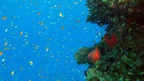 Κοραλλιογενής ύφαλος και τροπικά ψάρια Στοκ εικόνες με δικαίωμα ελεύθερης χρήσης