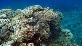 Κοραλλιογενής ύφαλος και τροπικά ψάρια Στοκ Φωτογραφία