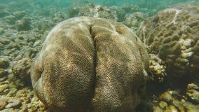 Κοραλλιογενής ύφαλος με το κοράλλι εγκεφάλου φιλμ μικρού μήκους