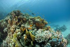 κοραλλιογενής ύφαλος υποβρύχια στοκ εικόνα με δικαίωμα ελεύθερης χρήσης