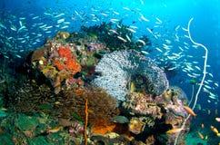 κοραλλιογενής ύφαλος στοκ εικόνες