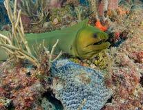 κοραλλιογενής ύφαλος & στοκ εικόνα