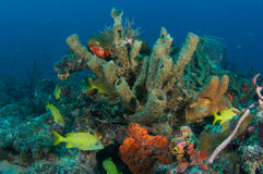 κοραλλιογενής ύφαλος & Στοκ φωτογραφία με δικαίωμα ελεύθερης χρήσης
