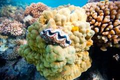 Κοραλλιογενής ύφαλος Στοκ φωτογραφίες με δικαίωμα ελεύθερης χρήσης