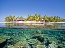 κοραλλιογενής ύφαλος Στοκ εικόνες με δικαίωμα ελεύθερης χρήσης