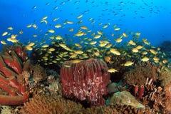 Κοραλλιογενής ύφαλος Moalboal Στοκ Εικόνα