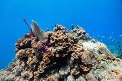 κοραλλιογενής ύφαλος &u Στοκ Εικόνα