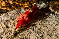 Κοραλλιογενείς ύφαλοι και εργοστάσια νερού στη Ερυθρά Θάλασσα Στοκ Φωτογραφίες