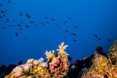 Κοραλλιογενείς ύφαλοι και εργοστάσια νερού στη Ερυθρά Θάλασσα στοκ φωτογραφία με δικαίωμα ελεύθερης χρήσης