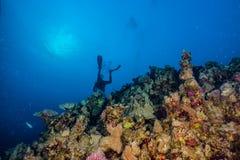 Κοραλλιογενείς ύφαλοι και εργοστάσια νερού στη Ερυθρά Θάλασσα στοκ φωτογραφίες με δικαίωμα ελεύθερης χρήσης