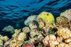 Κοραλλιογενείς ύφαλοι και εργοστάσια νερού στη Ερυθρά Θάλασσα στοκ εικόνα με δικαίωμα ελεύθερης χρήσης
