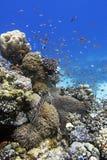 Κοραλλιογενής ύφαλος και ψάρια Στοκ φωτογραφίες με δικαίωμα ελεύθερης χρήσης