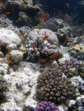 Κοραλλιογενής ύφαλος και ψάρια Στοκ Εικόνες