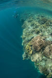 Κοραλλιογενής ύφαλος και Snorkeler στοκ εικόνες