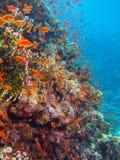 Κοραλλιογενής ύφαλος με τα μέρη των ψαριών Στοκ Φωτογραφία