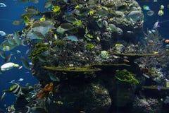 Κοραλλιογενής ύφαλος με τα μέρη των ψαριών Στοκ Φωτογραφίες