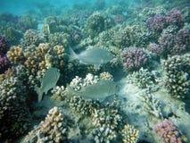 Κοραλλιογενής ύφαλος με τα πλάσματα Στοκ φωτογραφία με δικαίωμα ελεύθερης χρήσης