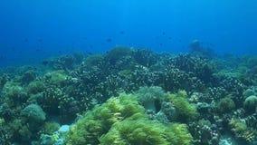 Κοραλλιογενής ύφαλος με τα υγιή σκληρά και μαλακά κοράλλια απόθεμα βίντεο