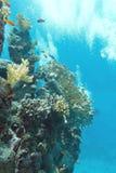 Κοραλλιογενής ύφαλος με το κοπάδι των anthias ψαριών scalefin, υποβρύχιο Στοκ Φωτογραφίες