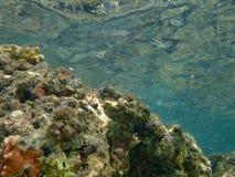 Κοραλλιογενής ύφαλος στη Ερυθρά Θάλασσα από υποβρύχιο Στοκ φωτογραφίες με δικαίωμα ελεύθερης χρήσης