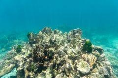 Κοραλλιογενής ύφαλος στη θάλασσα για την άποψη undewater Στοκ φωτογραφίες με δικαίωμα ελεύθερης χρήσης