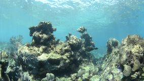 Κοραλλιογενής ύφαλος απόθεμα βίντεο